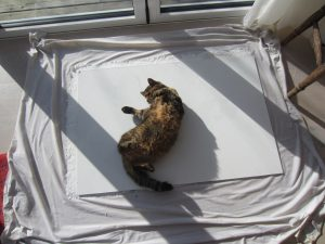 Cat rolling on wet paper sheet.
